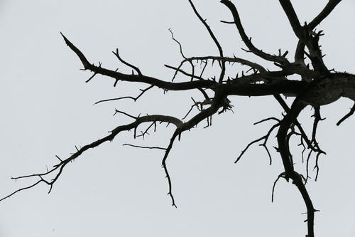 Dried leafless tree branch against sky