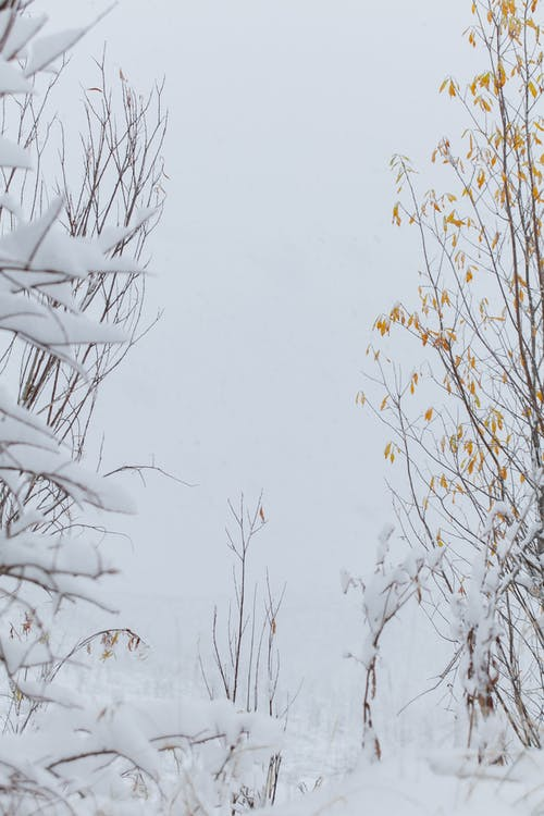 Thin leafless branches of bushes covered with snow in cold weather in winter