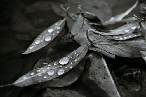 Heap of wet fallen leaves