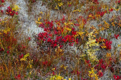 Colorful fragrant red white and yellow flowers growing on ground with withered grass in nature during blooming season in countryside