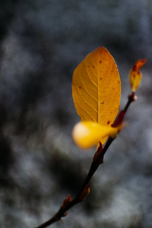 Small bright yellow leaf on brown twig of plant on blurred grey background