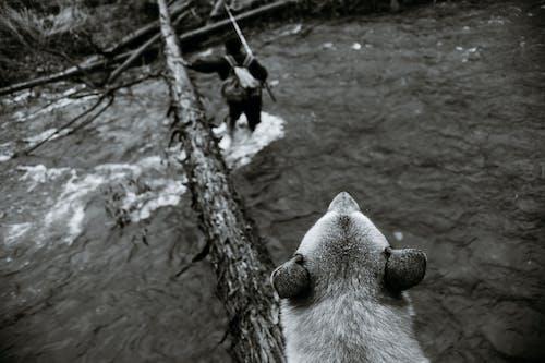 Fotos de stock gratuitas de actividad, activo, agua