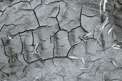 Dry texture of gray ground