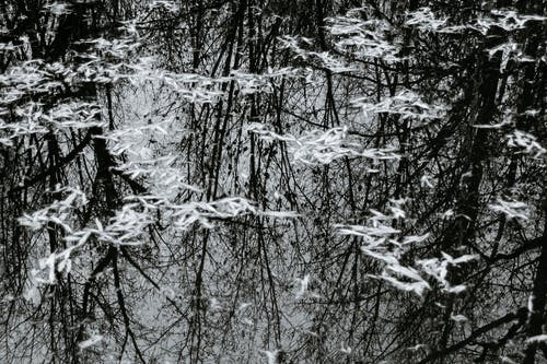 Black and white high angle of tall trees without foliage reflecting in calm water surface