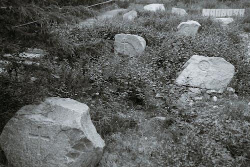 Gravestones amidst grass and plants