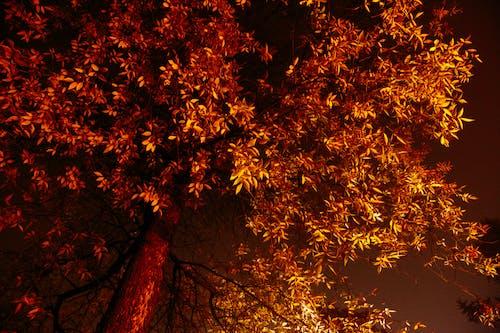 Základová fotografie zdarma na téma botanický, bujný, divoký