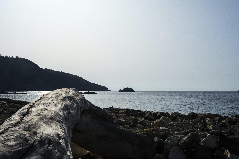 Free stock photo of beach, branch, island, light reflections