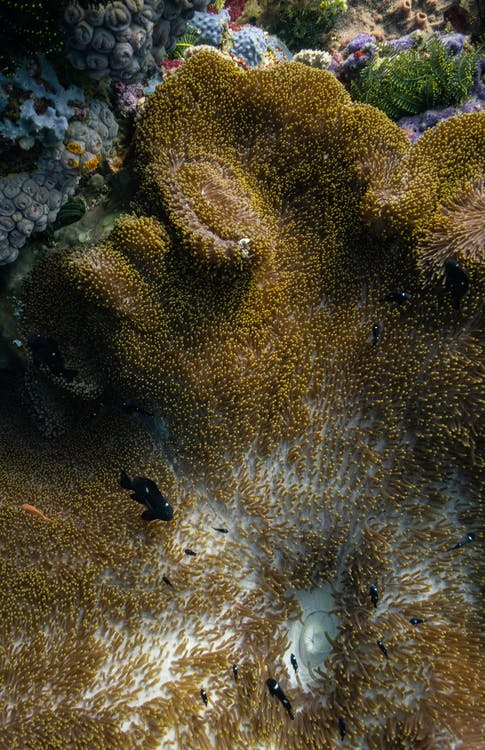 Δωρεάν στοκ φωτογραφιών με scuba, άγρια φύση, ασπόνδυλος