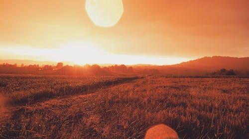 Foto d'estoc gratuïta de blanquejat, camps, capvespre, efecte solar