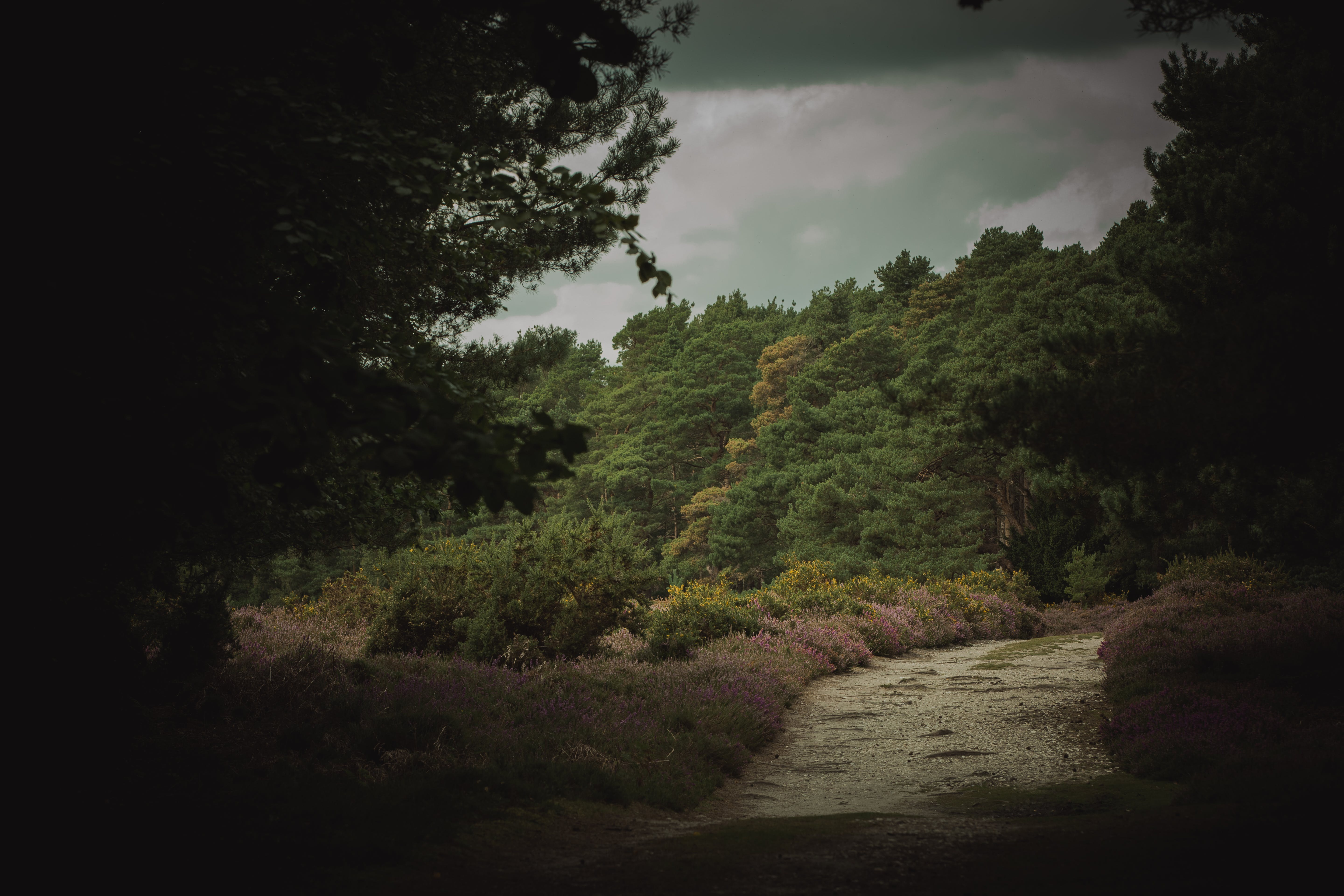 Free stock photo of abandoned, beautiful, brownsea island, forest