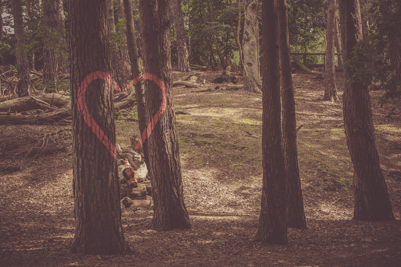 Kostenloses Stock Foto zu bäume, baumrinde, baumstämme, blätter
