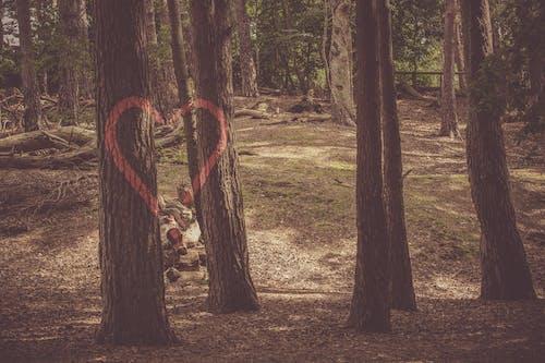 Gratis arkivbilde med fallne trær, form, fredelig, graffiti