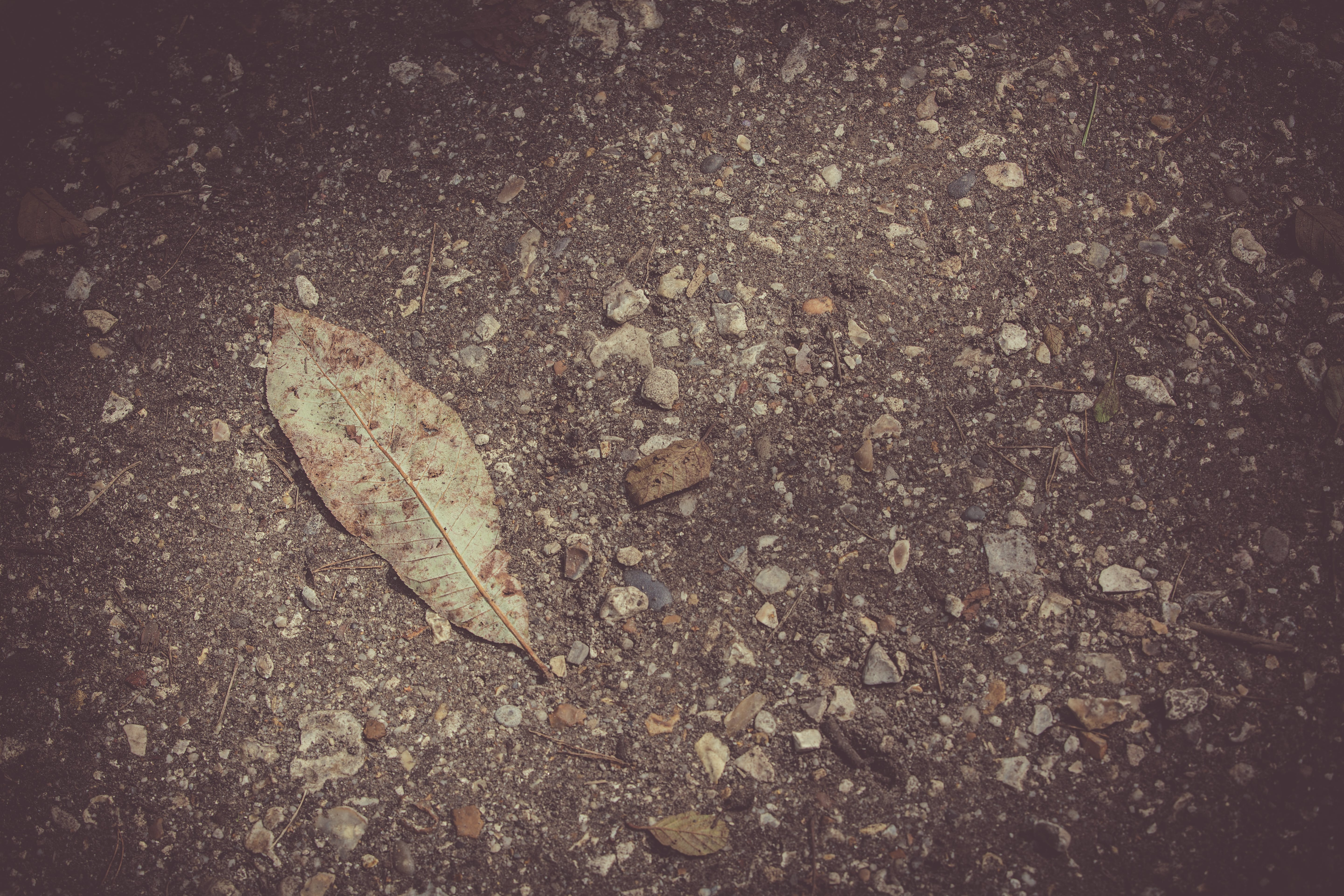 Free stock photo of dried leaves, floor, ground, stones