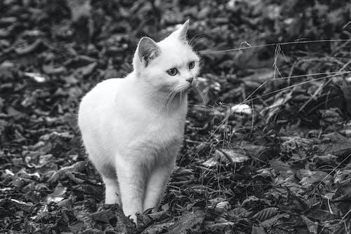 Immagine gratuita di adorabile, animale, animale domestico, capelli