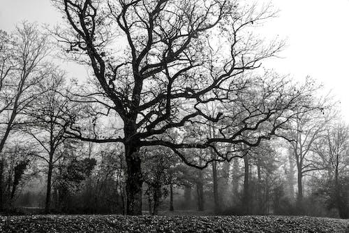 Immagine gratuita di albero, autunno, cadere, da solo