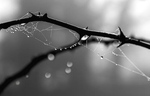 Immagine gratuita di alba, astratto, bagnato, bianco e nero