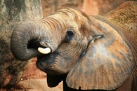nature, animal, africa