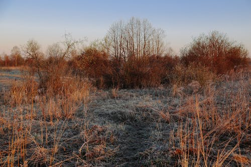 Scenery of dry trees and tall meadow grass covered with hoarfrost located in autumn frosty countryside
