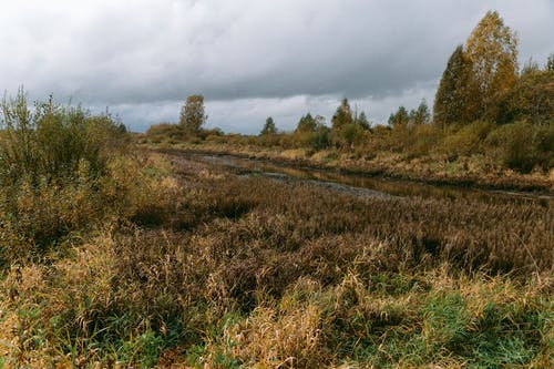 Grass and trees growing along river flowing through countryside area under cloudy sky