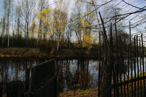 Scenery of calm river flowing among leafless tall trees in daytime in fall