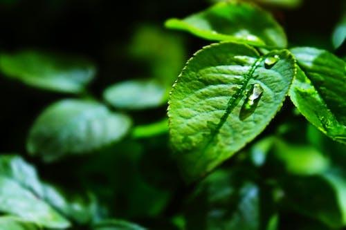 คลังภาพถ่ายฟรี ของ การเจริญเติบโต, ต้นไม้, ธรรมชาติ, น้ำค้าง