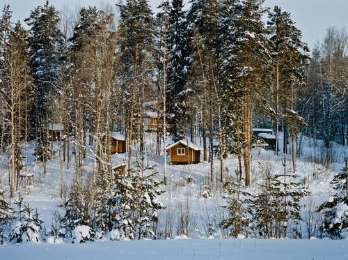 Small wooden huts in winter forest
