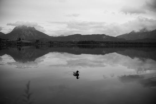 Grayscale Photo of a Duck on a Lake