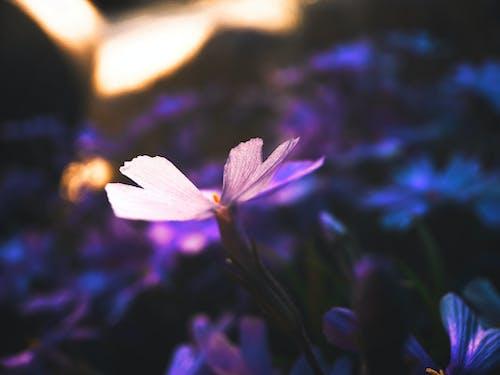 光, 光線, 增長 的 免費圖庫相片