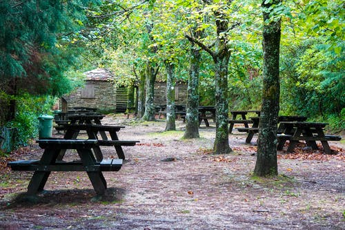 Free stock photo of autumn park, coimbra, green