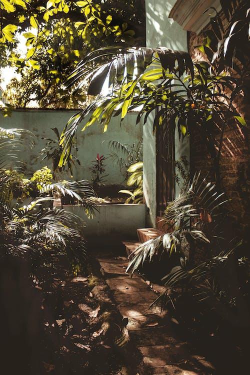 Безкоштовне стокове фото на тему «san juan, атмосферний, вода, дерева»
