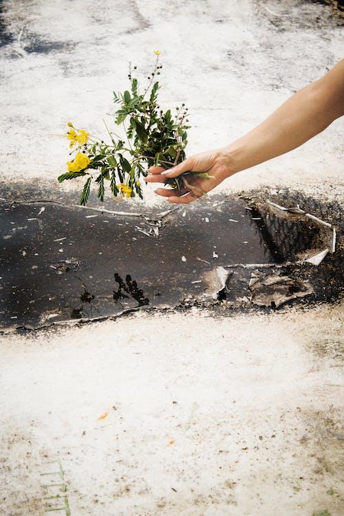 Безкоштовне стокове фото на тему «H2O, vintage фото, брудний, Букет квітів»