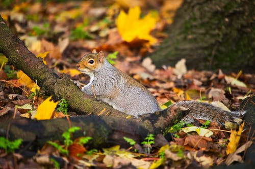 動物, 可愛, 天性 的 免費圖庫相片