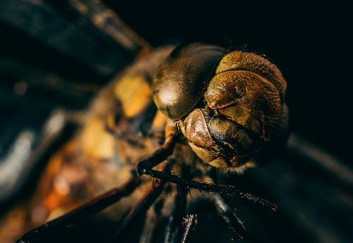 Photos gratuites de animal, antenne, arachnide
