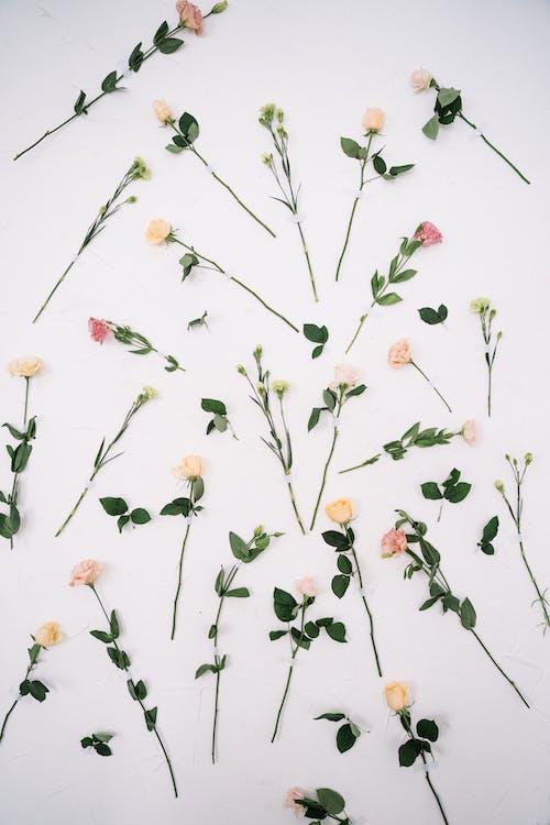 Foto d'estoc gratuïta de flatlay, flors, Fons de pantalla 4k