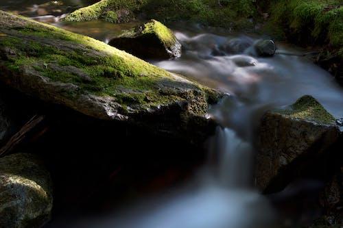 Kostnadsfri bild av bäck, fors, fotografera, grön
