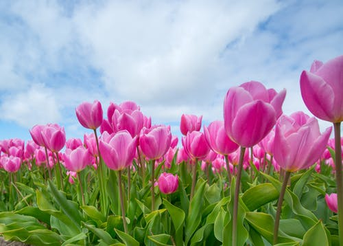 คลังภาพถ่ายฟรี ของ กลีบดอก, การเจริญเติบโต, กำลังบาน, งดงาม