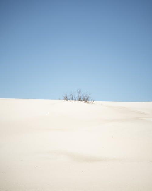 Bare Tree on White Sand Under Blue Sky