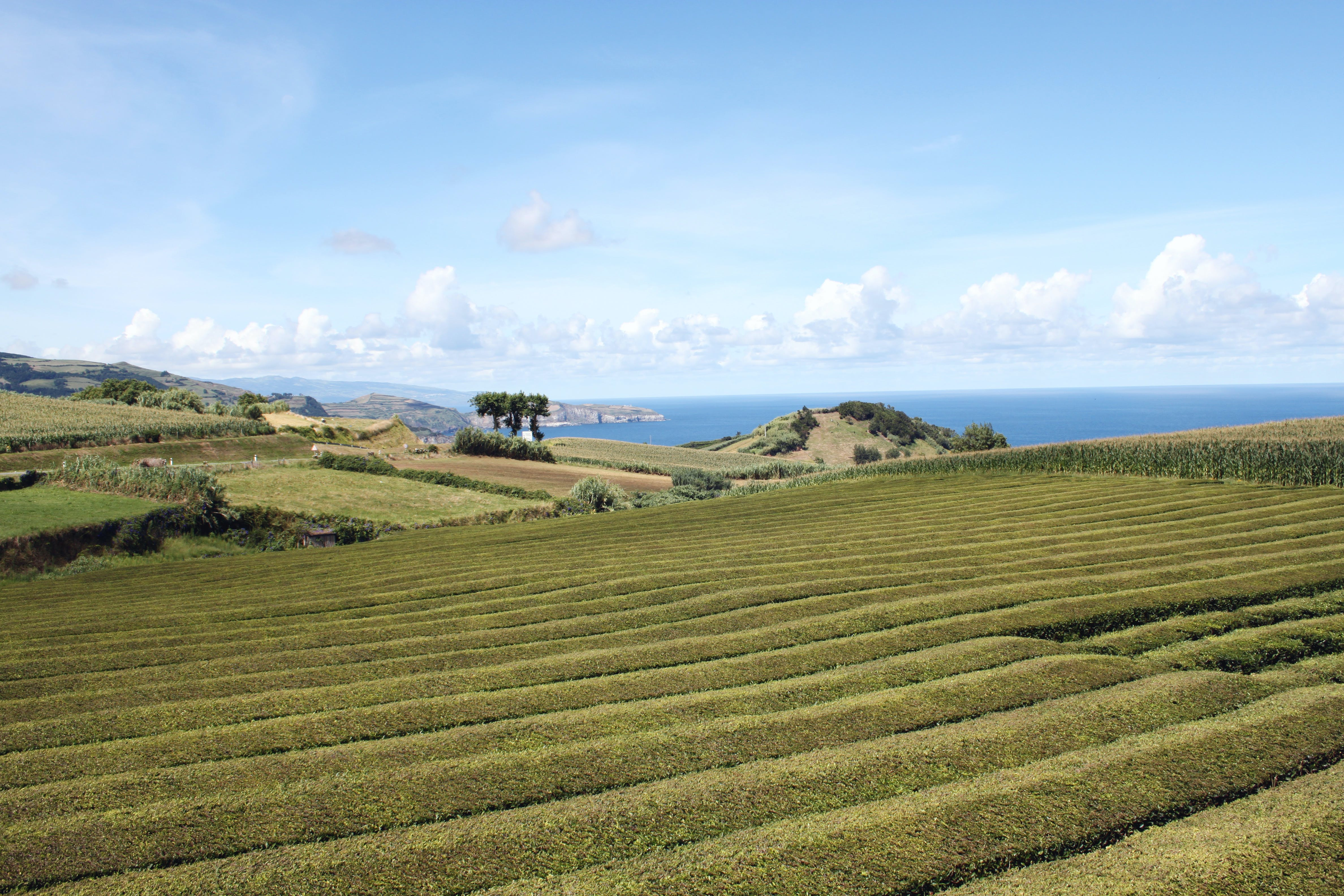Free stock photo of agriculture, Azores, blue, blue sky