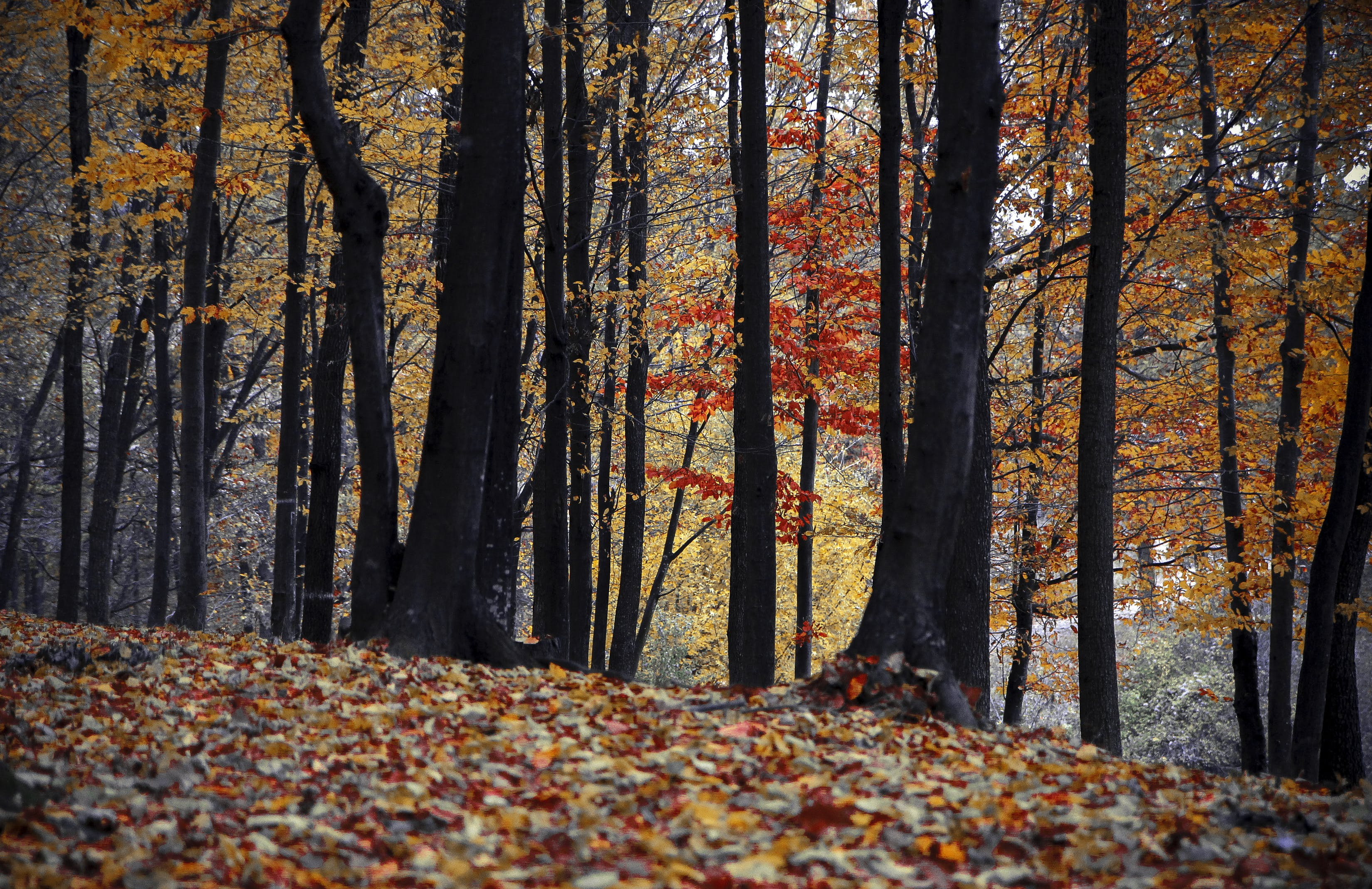Orange and Brown Leaf Trees