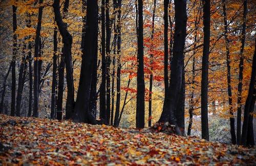 Gratis lagerfoto af miljø, natur, skov, træer