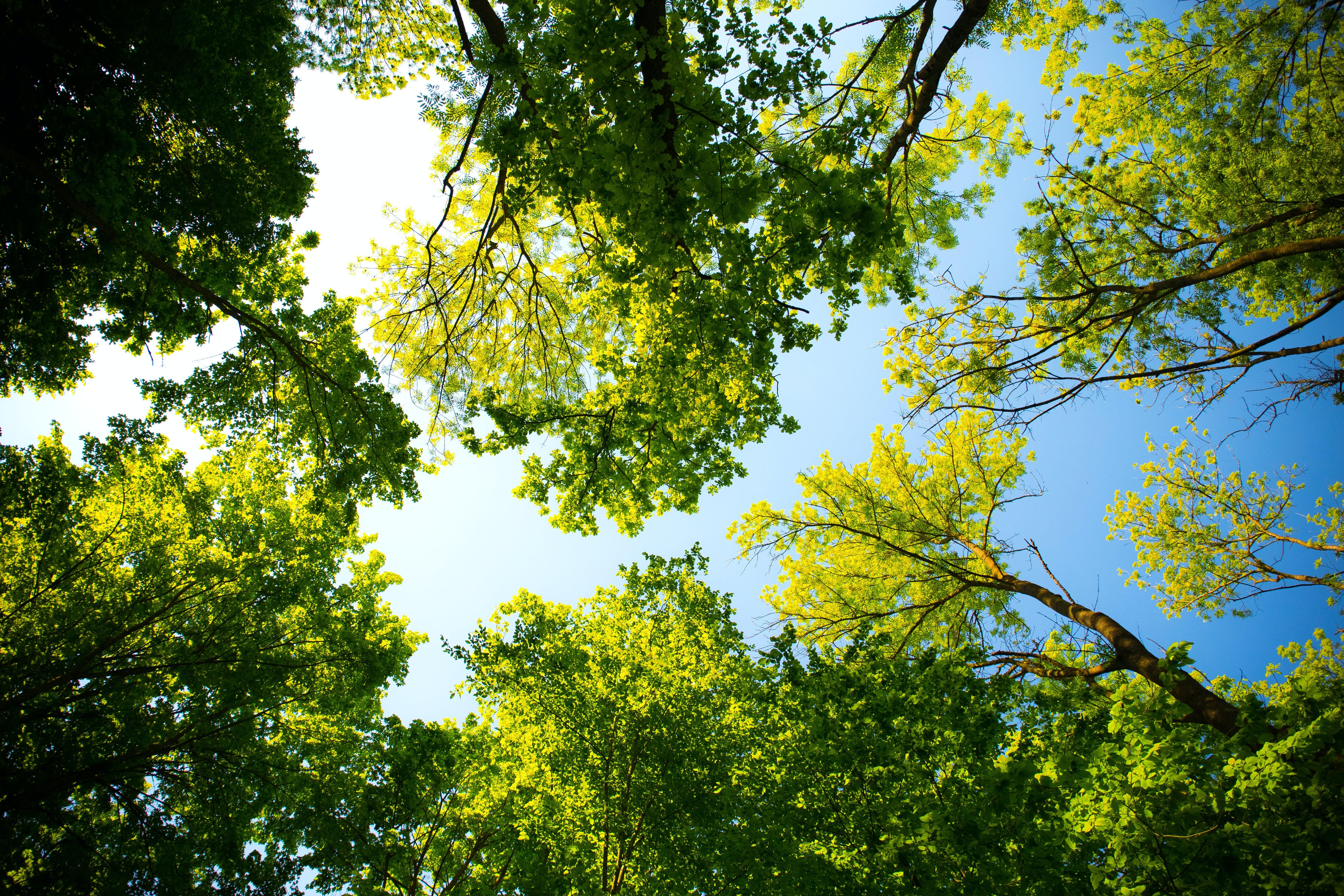 Immagine gratuita di alberi, boschi, foresta, luce del giorno