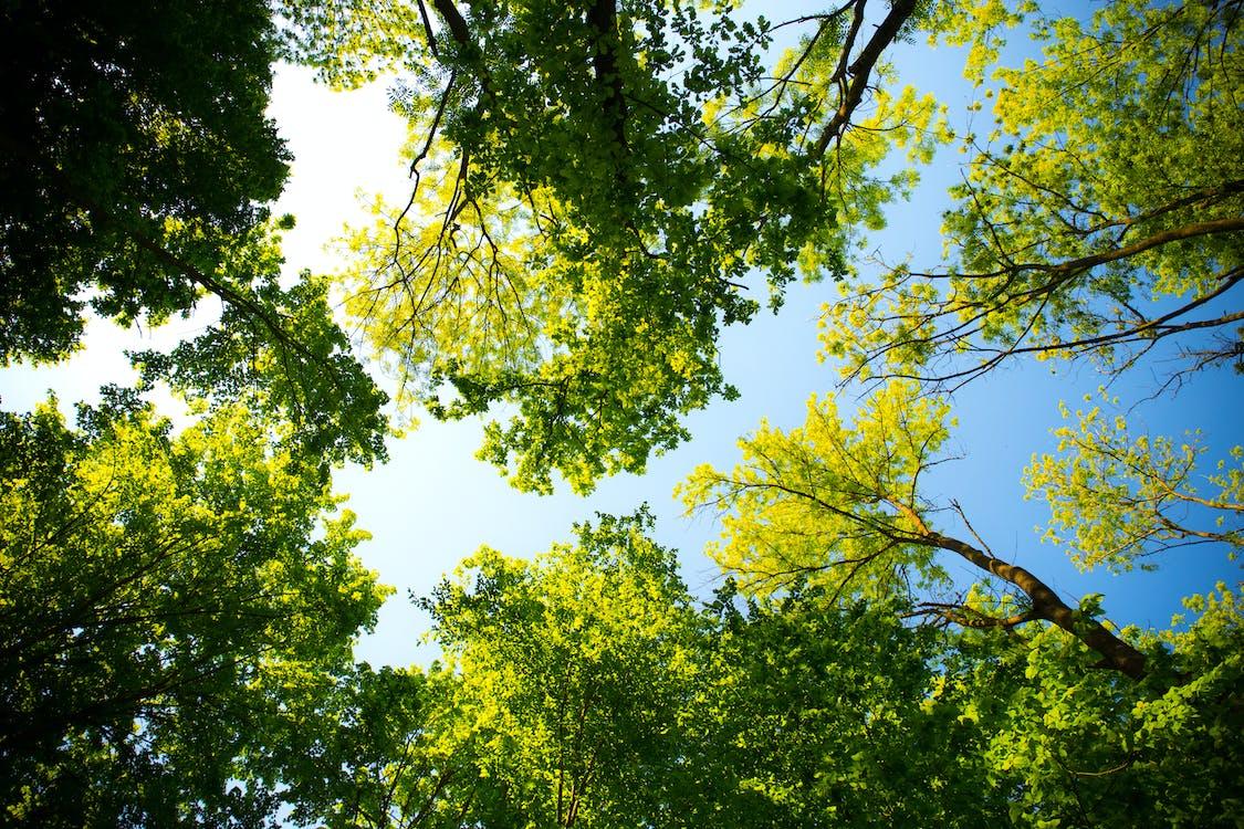 ánh sáng ban ngày, cây, công viên