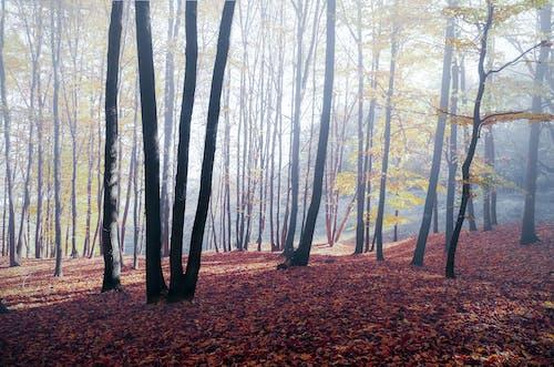 Foto profissional grátis de árvores, cênico, floresta, leve