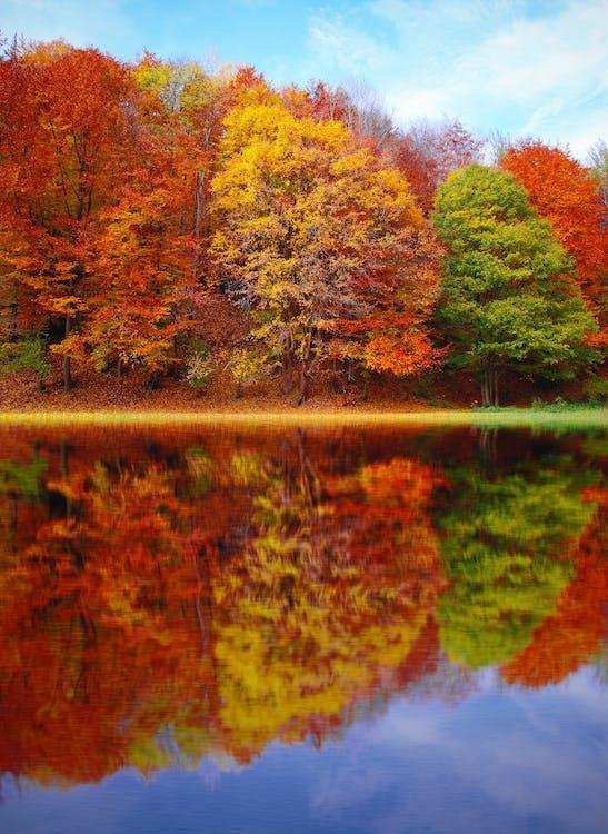 alkotás, csendélet, erdő