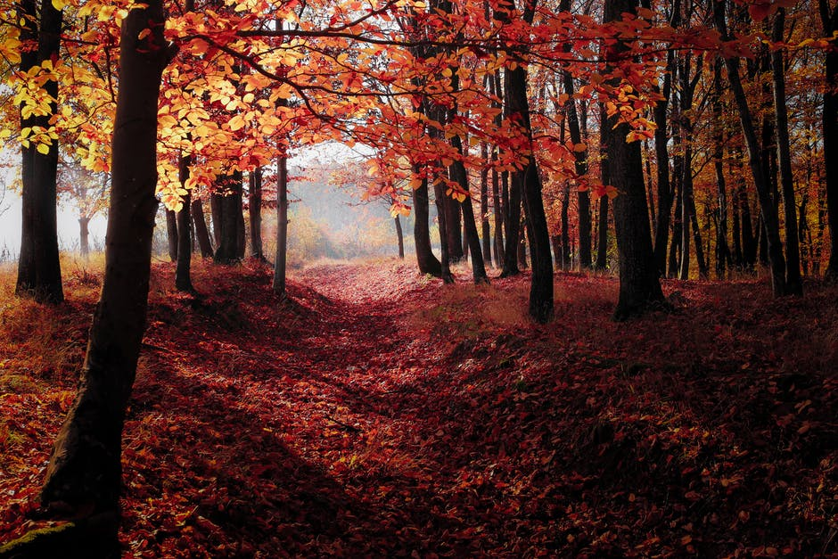 autumn, backlit, dawn