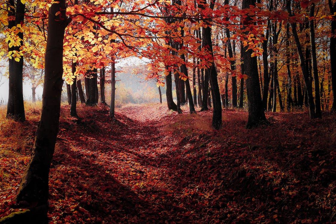 bäume, dämmerung, hinterleuchtet