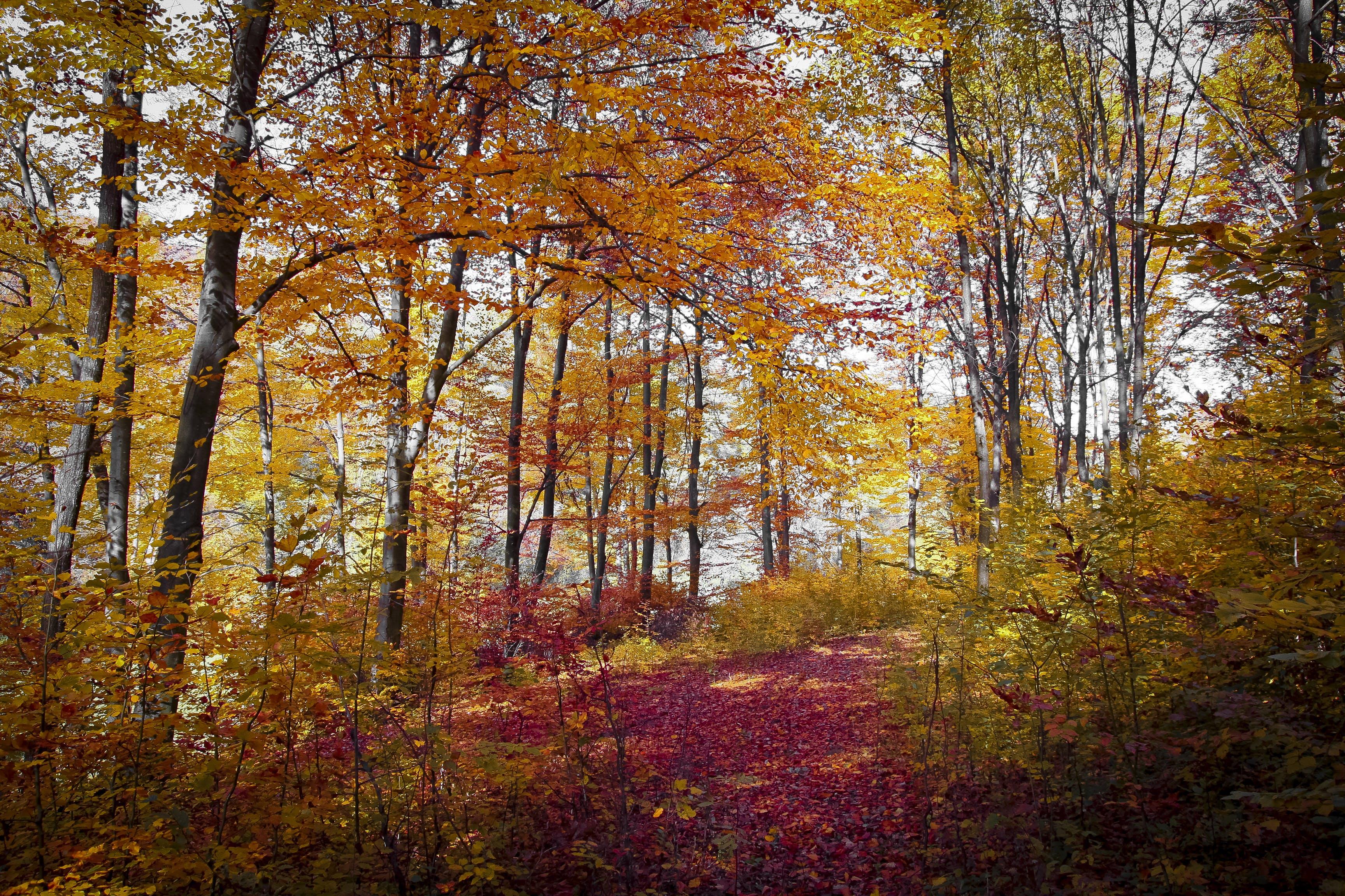 autumn, branch, daylight