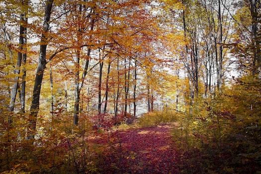 Free stock photo of nature, forest, trees, autumn