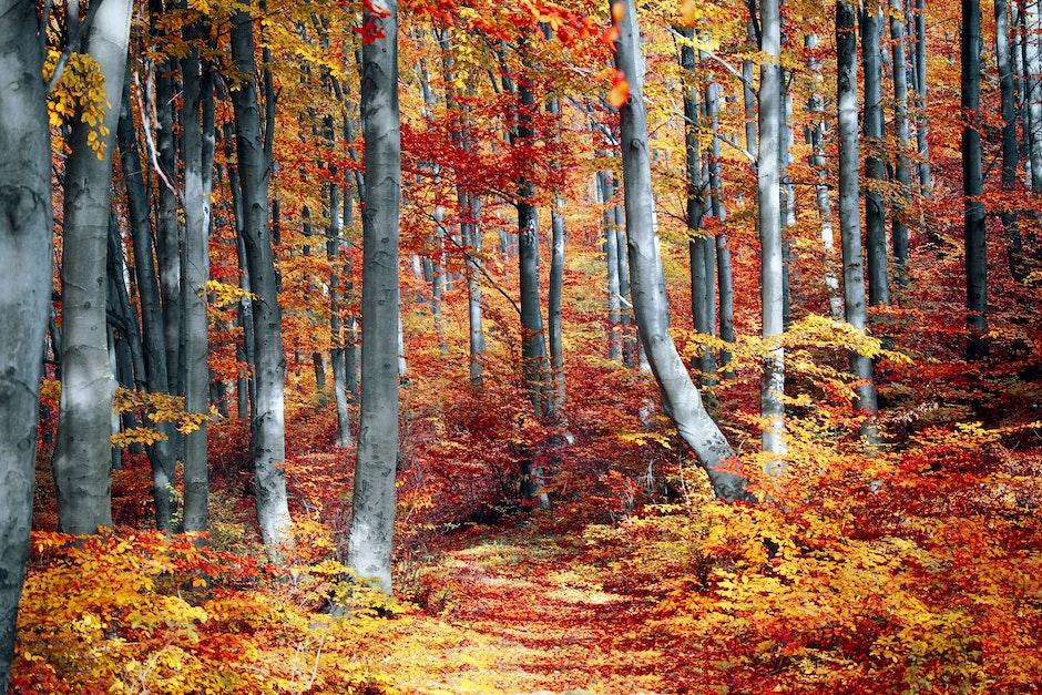 art, autumn, autumn leaves