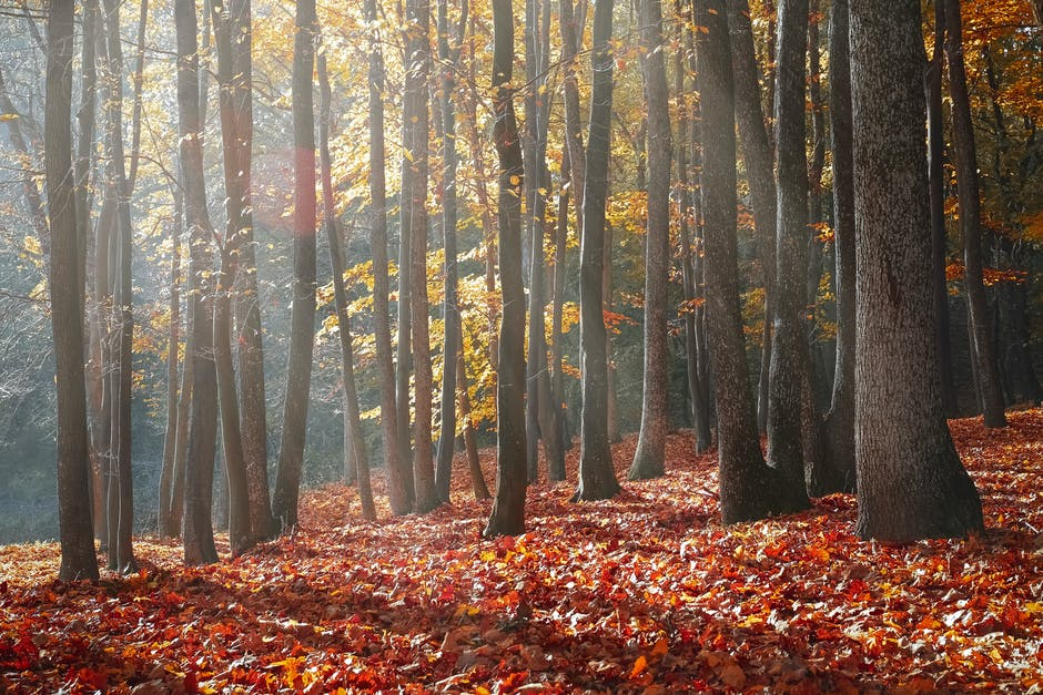 Landscape photography of forest during autumn season